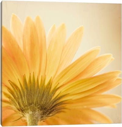 Butterscotch Canvas Art Print