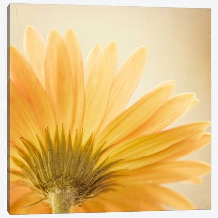 Butterscotch Canvas Print #ICS115} by Carolyn Cochrane Art Print