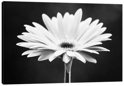 Daisy Canvas Art Print