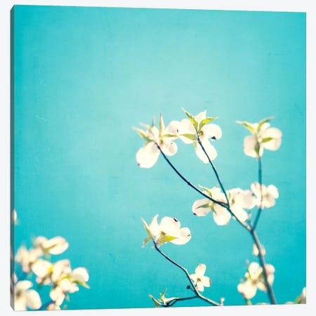 Delicate Canvas Print #ICS119} by Carolyn Cochrane Canvas Artwork