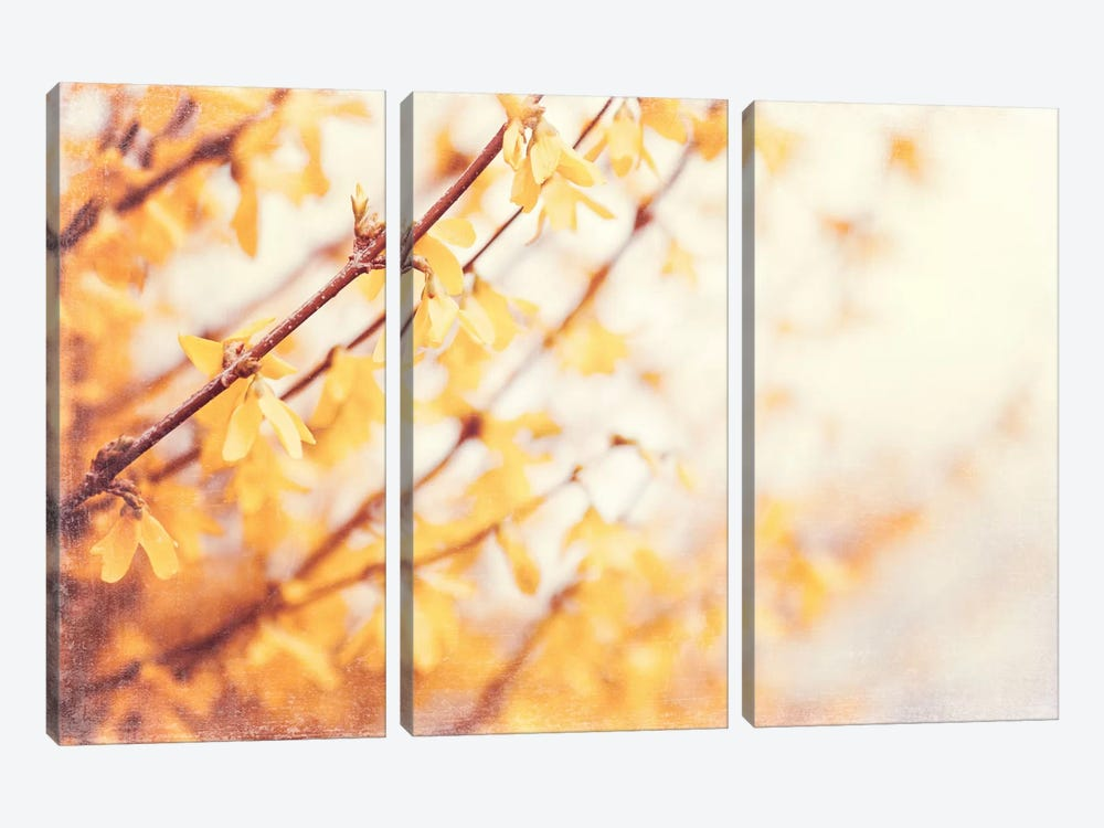 In the Beginning 3-piece Canvas Art Print