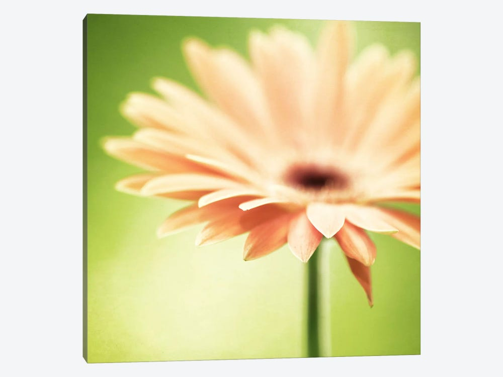 Joyful by Carolyn Cochrane 1-piece Canvas Wall Art