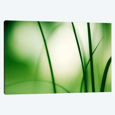 Natural Flow Canvas Print #ICS124} by Carolyn Cochrane Canvas Wall Art