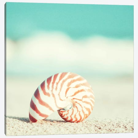 Nautilus Canvas Print #ICS126} by Carolyn Cochrane Canvas Artwork