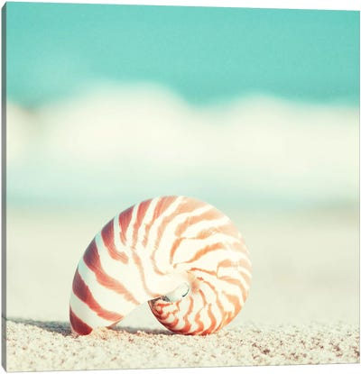 Nautilus Canvas Print #ICS126
