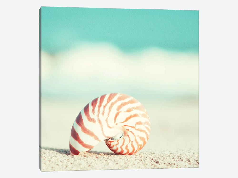 Nautilus by Carolyn Cochrane 1-piece Art Print