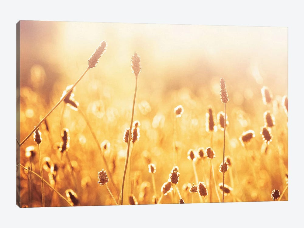 Nothing Gold Can Stay by Carolyn Cochrane 1-piece Canvas Artwork