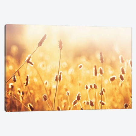 Nothing Gold Can Stay 3-Piece Canvas #ICS127} by Carolyn Cochrane Canvas Wall Art