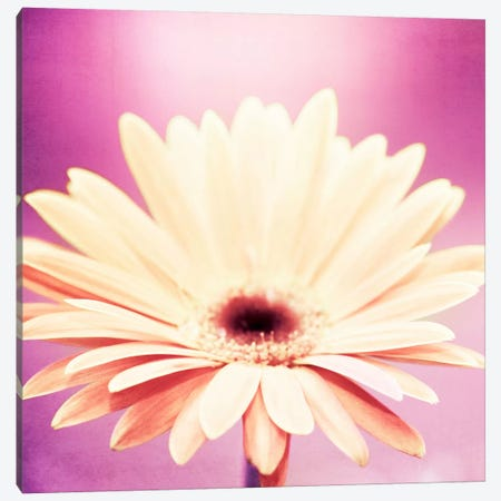 Peachy Keen Canvas Print #ICS130} by Carolyn Cochrane Canvas Artwork