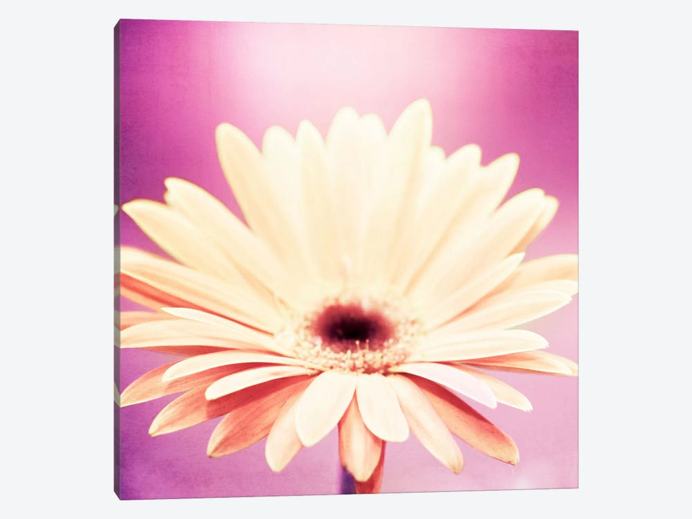 Peachy Keen by Carolyn Cochrane 1-piece Canvas Artwork