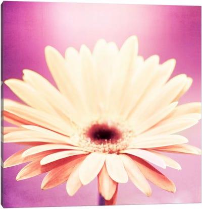 Peachy Keen Canvas Art Print