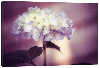 Regal Canvas Art Print