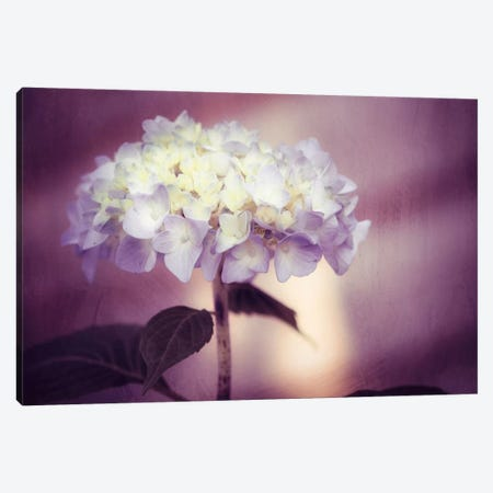 Regal Canvas Print #ICS131} by Carolyn Cochrane Canvas Wall Art