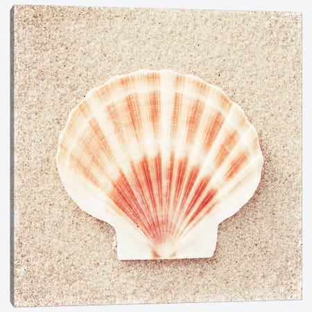 Scallop Shell Canvas Print #ICS133} by Carolyn Cochrane Canvas Wall Art