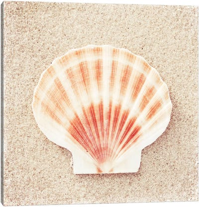 Scallop Shell Canvas Art Print