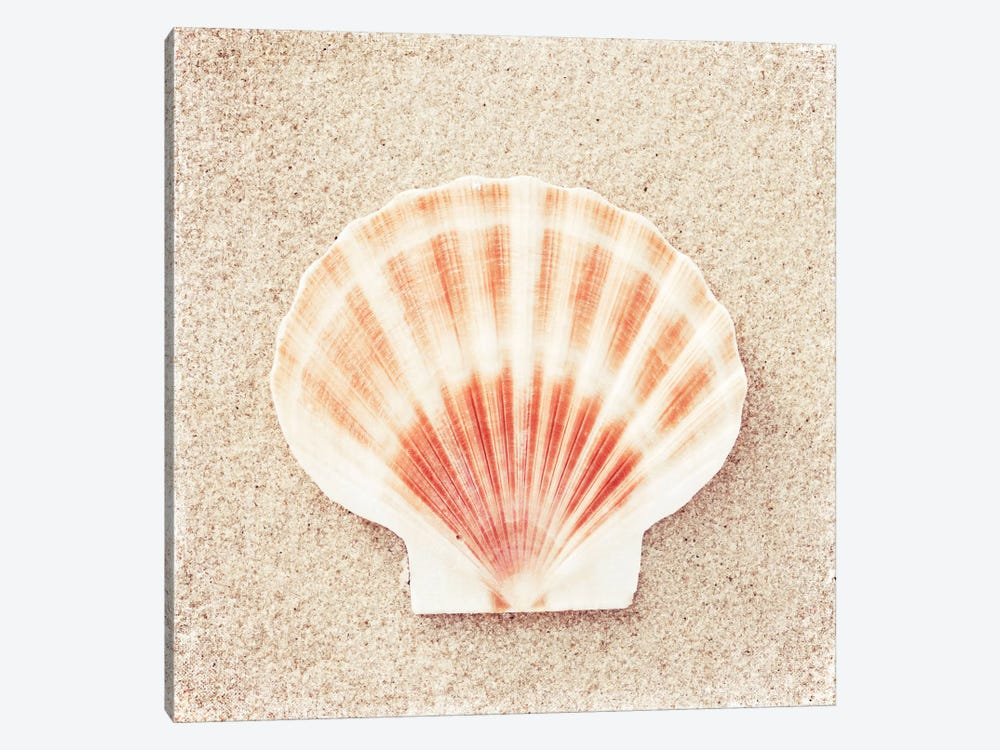 Scallop Shell by Carolyn Cochrane 1-piece Art Print