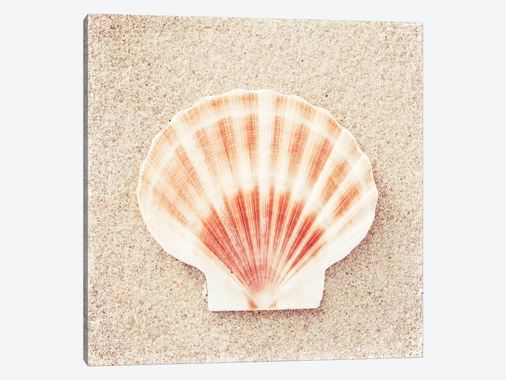 Scallop Shell by Carolyn Cochrane 1-piece Art Print