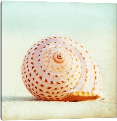 Seashell Voices Canvas Art Print