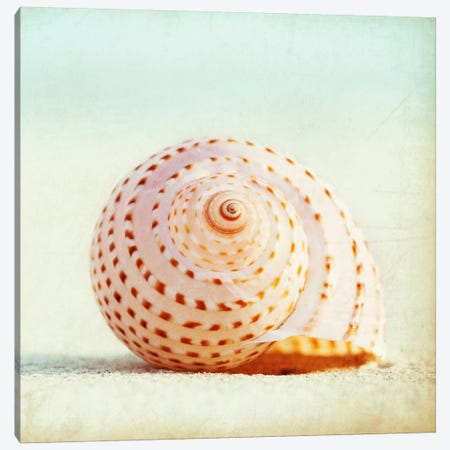 Seashell Voices Canvas Print #ICS134} by Carolyn Cochrane Canvas Print