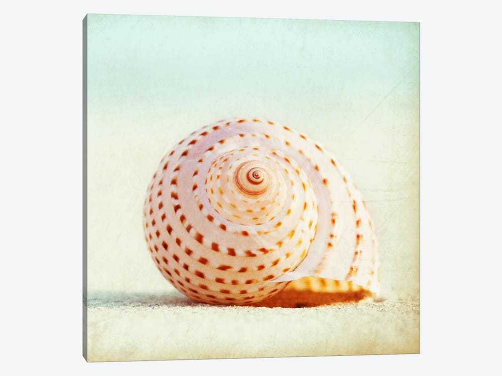 Seashell Voices by Carolyn Cochrane 1-piece Canvas Art