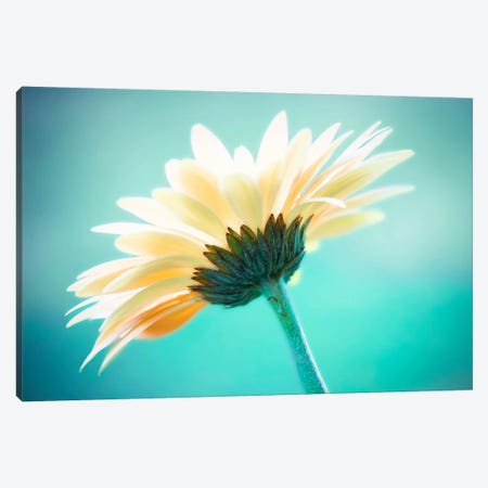 Vanity Canvas Print #ICS146} by Carolyn Cochrane Canvas Art