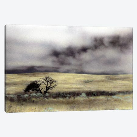 Limantour Marsh Canvas Print #ICS147} by Laura Culver Canvas Artwork