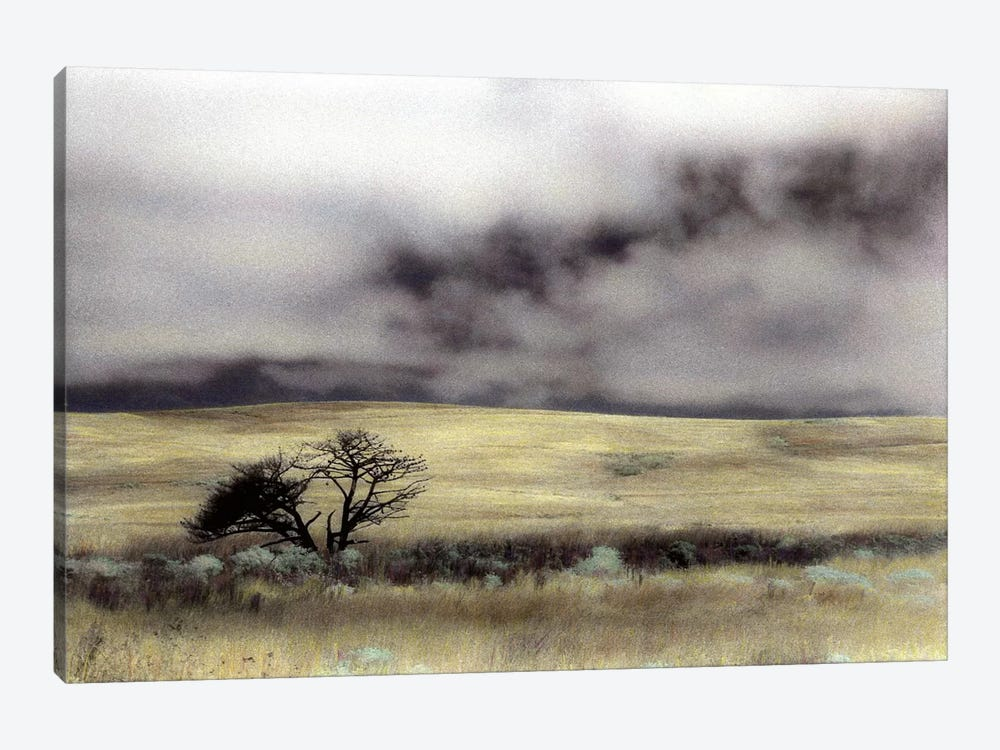 Limantour Marsh by Laura Culver 1-piece Canvas Art