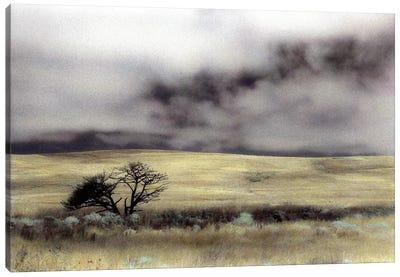 Limantour Marsh Canvas Art Print