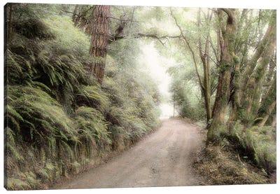 Lost Coast Road Canvas Art Print