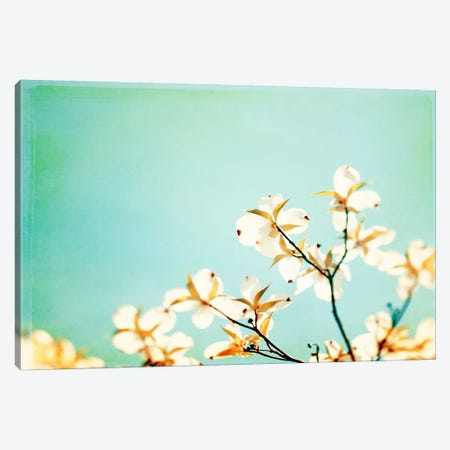 Blossoms Adrift Canvas Print #ICS160} by Carolyn Cochrane Canvas Print