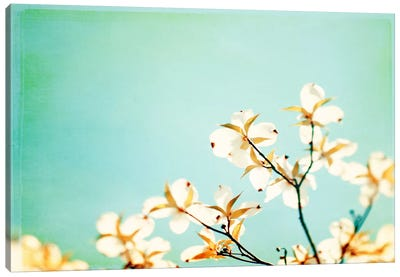 Blossoms Adrift Canvas Art Print