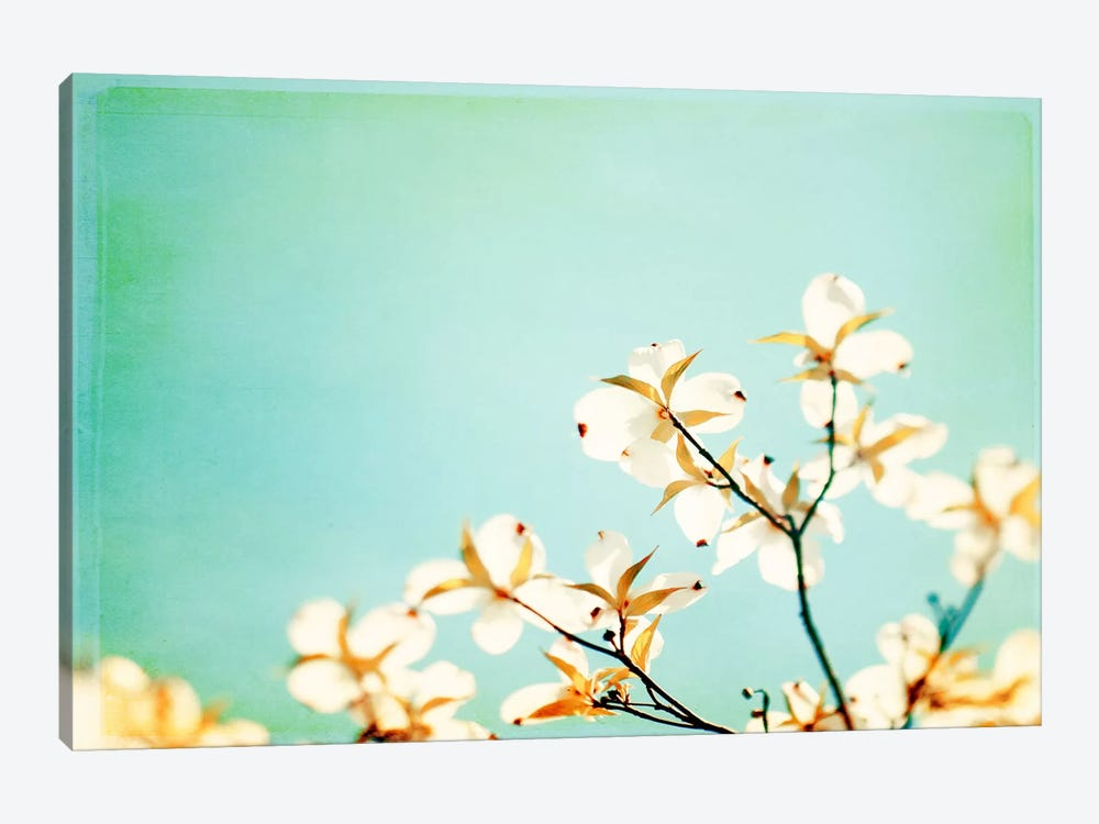 Blossoms Adrift by Carolyn Cochrane 1-piece Canvas Print
