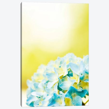 Hydrangea Canvas Print #ICS163} by Carolyn Cochrane Canvas Print