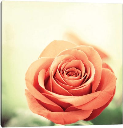 My Perfect Rose Canvas Art Print