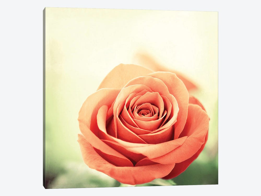 My Perfect Rose by Carolyn Cochrane 1-piece Canvas Wall Art