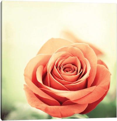 My Perfect Rose Canvas Art Print