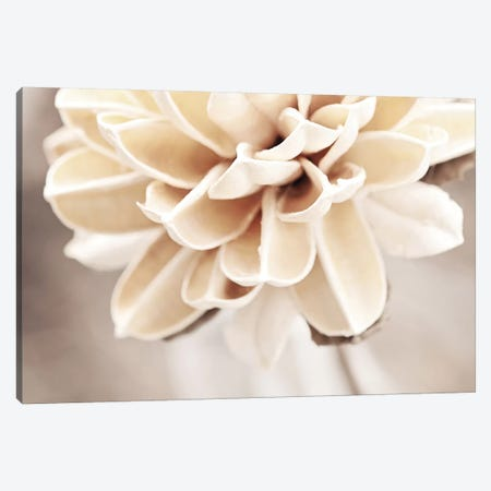 Touched By an Angel Canvas Print #ICS166} by Carolyn Cochrane Canvas Art