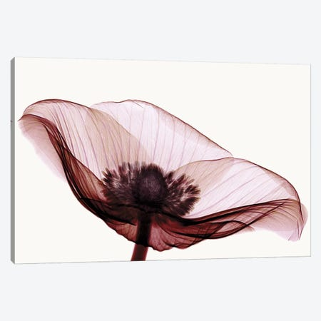 Anemone I Canvas Print #ICS173} by Robert Coop Canvas Artwork
