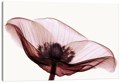 Anemone I Canvas Art Print