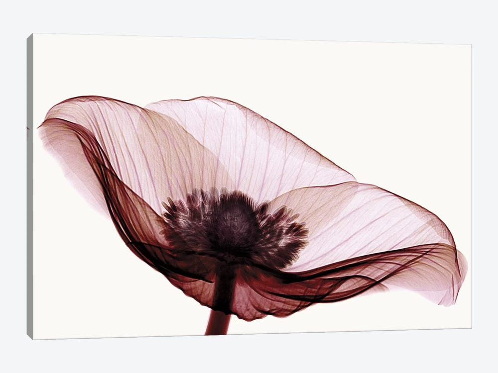 Anemone I 1-piece Canvas Art Print