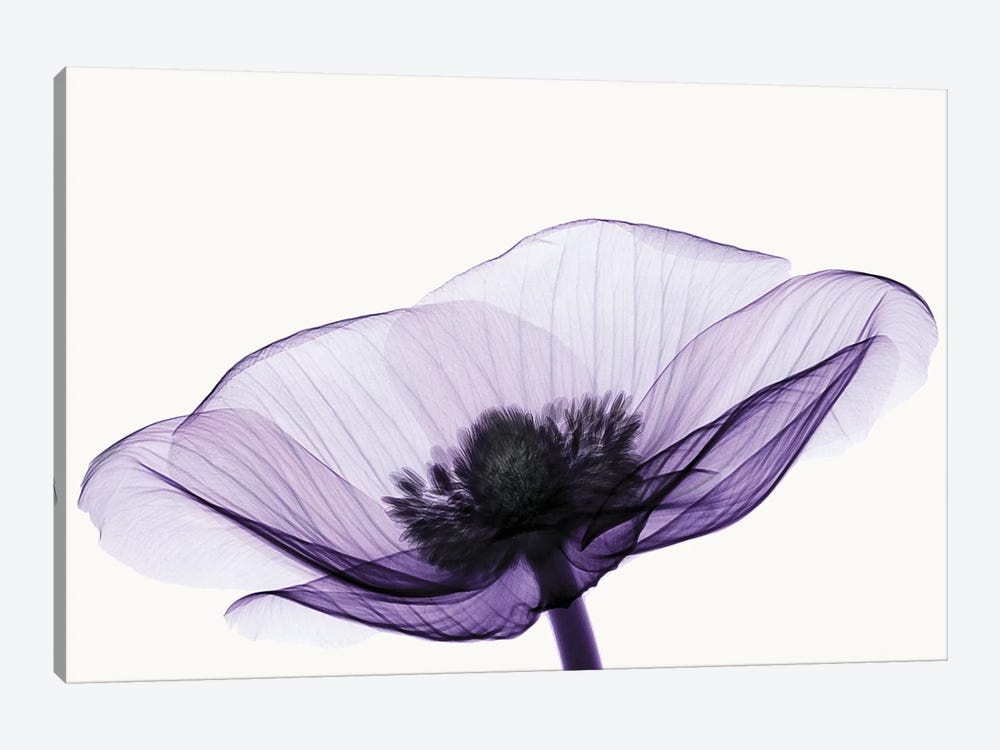 Anemone II by Robert Coop 1-piece Canvas Wall Art