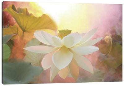 Arise Canvas Art Print