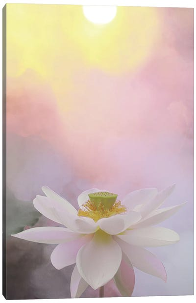 Beauty at Dawn Canvas Art Print