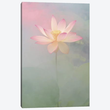 Pink Passion Canvas Print #ICS212} by Bahman Farzad Canvas Art Print