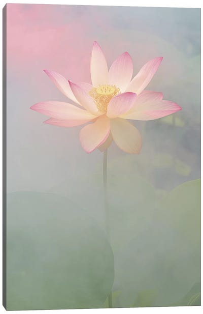 Pink Passion Canvas Art Print
