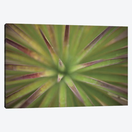 Arizona Monocot Canvas Print #ICS214} by Todd France Canvas Artwork