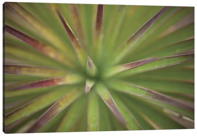 Arizona Monocot Canvas Art Print