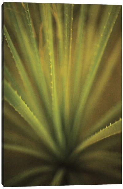 California Monocot Canvas Art Print
