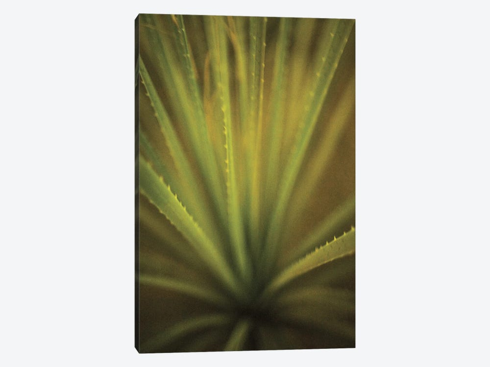 California Monocot by Todd France 1-piece Canvas Art Print