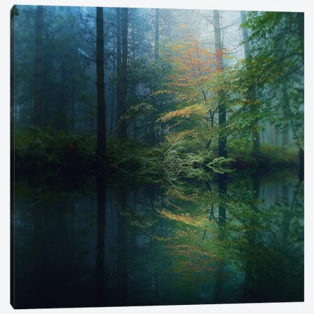 The Forest Canvas Print #ICS220} by Adelino Goncalves Canvas Art